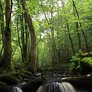 Inchewan Burn, Birnam by Steve Jensen
