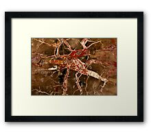 Funky Geology Framed Print