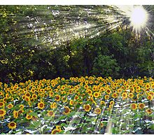 Field of Inspiration Photographic Print