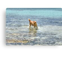 Dog playing in the Caribbean waters at Yamacraw Beach - Nassau, The Bahamas Canvas Print
