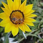 Busy Bee! by Kymbo