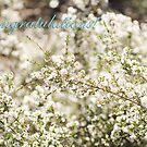 Congratulations! - Chamelaucium ciliatum by Kell Rowe