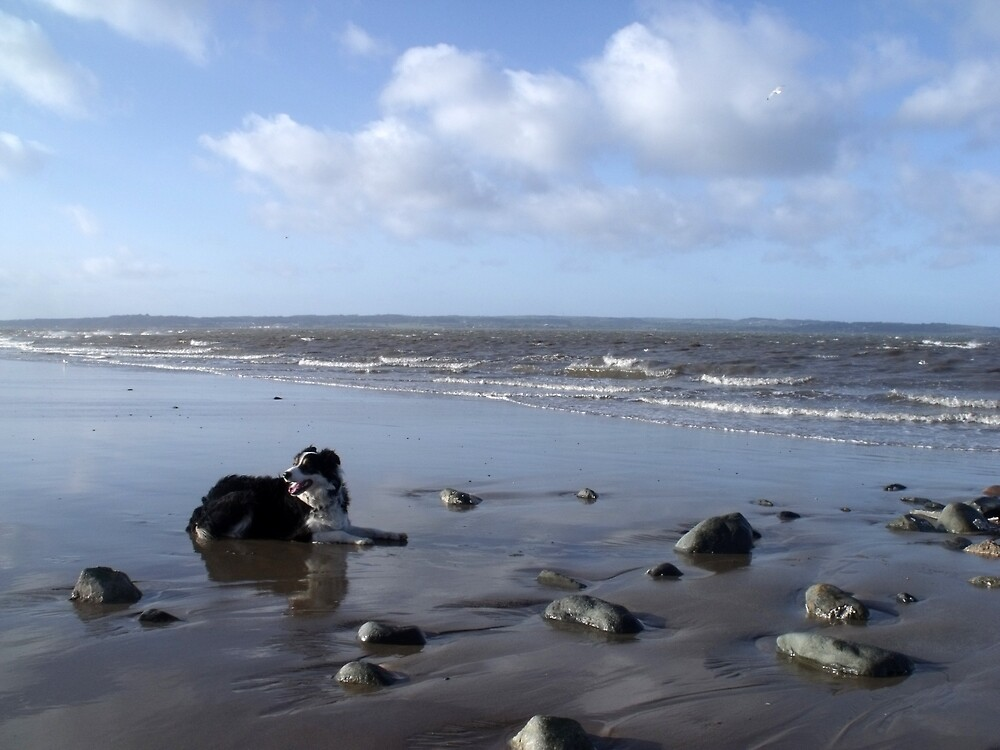 On the beach with Laddie. by Michael Haslam