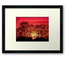 Trees in the Sunset Framed Print