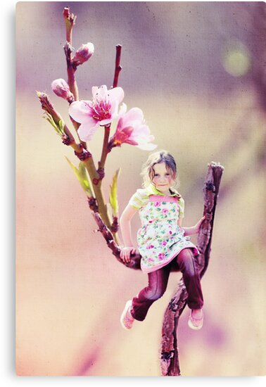 Darling Buds of May by micklyn