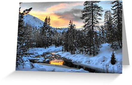 Winter Evening by Barbara  Brown