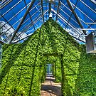 Greenhouse by Sharlene Rens
