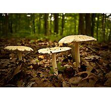 Love Fungi Photographic Print