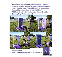 Dog for Disabled People  Photographic Print