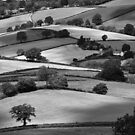 Devonshire Hillside by Michael Carter