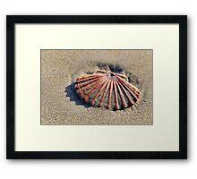 Scallop Shell ~ Lyme Regis Framed Print