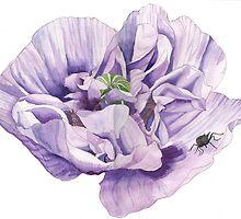 Single Purple Poppy by Esmee van Breugel