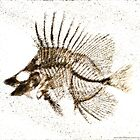 Fossilized Fish Digital Art by Jim Plaxco