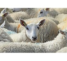 Who Ewe Looking at? Photographic Print