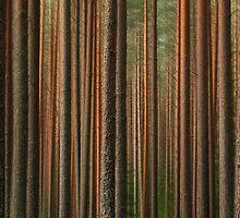 Bark-code by Irina Chuckowree