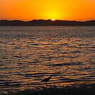 Sunset and sandpiper by Lee roberts