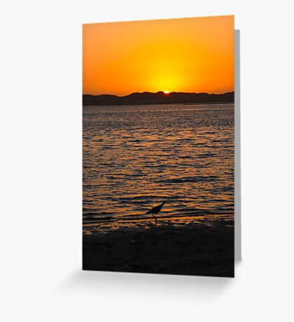 Sunset and sandpiper Greeting Card
