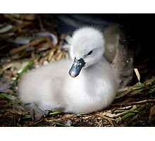 ...hello sweetie...welcome to the world... Photographic Print