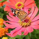 Butterfly and Flower Close-Up, New York Botanical Garden, Bronx, New York by lenspiro