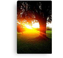 Sun Shining Canvas Print