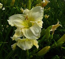 Lovely Lilies by MarianBendeth
