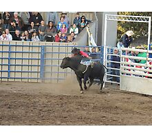About to Fall Off? Bull Riding Monterey County Fair Rodeo Photographic Print