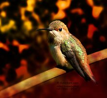 Fall Colors - Allens Hummingbird by Rateitart