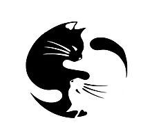 Ying yang cat (white) Photographic Print
