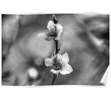 Stalker Blossom Poster