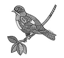 Belle Bird Photographic Print