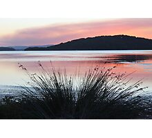 Weedy Sunset Photographic Print