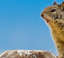 California Ground Squirrel, (Spermophilus beecheyi) Sticker