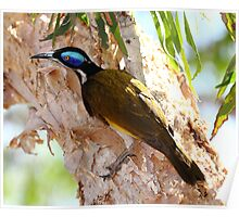 """Blue Faced Honey Eater"" Poster"