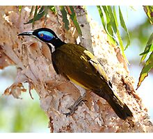 """""""Blue Faced Honey Eater"""" Photographic Print"""