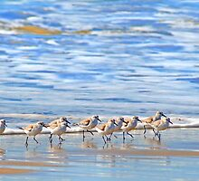 We're following the leader... Sandpipers in Goleta Beach California by Eyal Nahmias