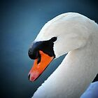 Swan by M.  Photography