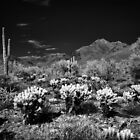 McDowell Sonoran Preserve, Scotsdale Arizona by Rodney Johnson