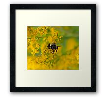 Up Close and Personal II Framed Print