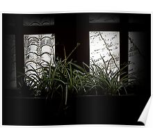 Spider Plant In The Shadows Poster