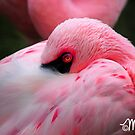 Pink Eye by milkayphoto