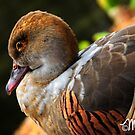 Duck à l'Orange by milkayphoto