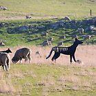 Tasmanian Tigers, Heritage Hwy, Tas by Wendy Dyer