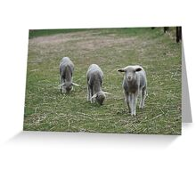 Its Lunchtime Lambs! Greeting Card