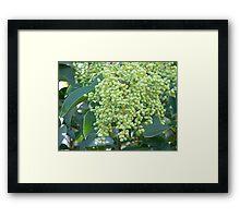 Tree Fruit Framed Print