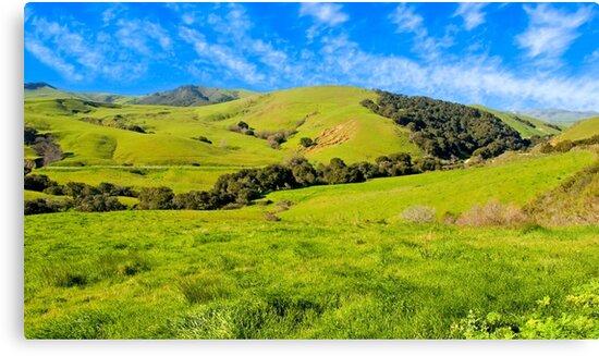 Green Meadow, Santa Ynez valley, CA by Eyal Nahmias