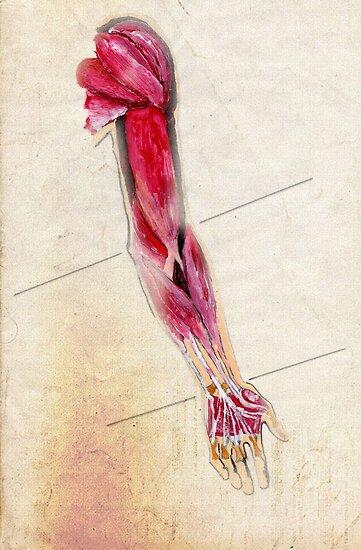 Arm by DankoSoroka