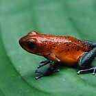 Poison dart frog by johnnycuervo