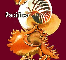 Pacifica 1 - South Pacific Seashells by Patricia Howitt