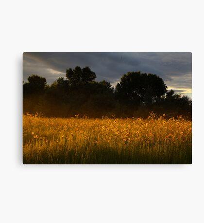 Yellow Streak Canvas Print