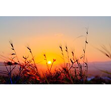 Sunset Spring Grasses - Byron Bay Photographic Print